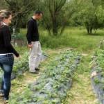 Beograd: Sve više mladih obrađuje zemlju