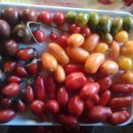 Zablude o paradajzu – prvi deo