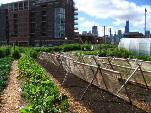 Primer urbane bašte u Čikagu, SAD