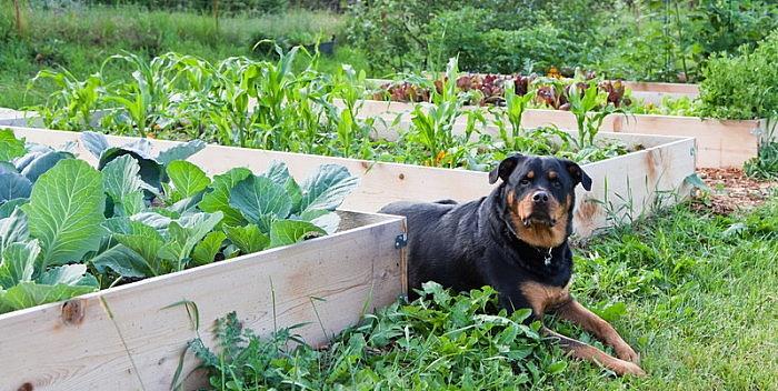 Vrtlarenje u slojevima bez kopanja – vrsta malčiranja – NEZAVISNO DOMAĆINSTVO