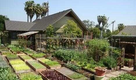 modern-homesteading