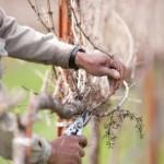 Rezidba voća – kako brzo shvatiti principe