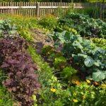 Bio vrt nije proizvodnja, već filozofija života