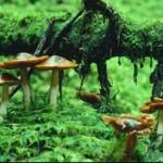Gljive i drugi stanovnici tla ( EM-tehnologija)