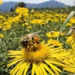Koje su koristi od oprašivanja pomoću insekata?