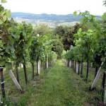 Ekološka zaštita u vocnjaku, vinogradu…BIO PESTICIDI