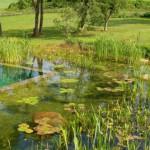 Šta su prirodni bazeni i kako ih napraviti