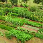 Мати Атанасија: Како произвести здраву храну