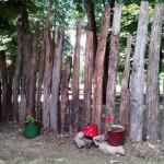 Eko park u Kragujevcu: Zavirite u pravu  ekološku oazu!