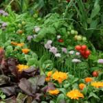 Kompatibilna sadnja: 10 cvetnica koje se slažu sa povrćem